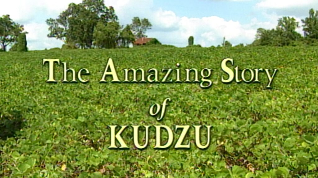"1996 Documentary Tells ""The Amazing Story of Kudzu"" – Watch it now."